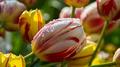 Flowers 06 - PhotoDune Item for Sale