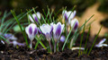 Flowers 38 - PhotoDune Item for Sale