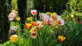 Flowers 17 - PhotoDune Item for Sale
