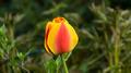 Flowers 25 - PhotoDune Item for Sale