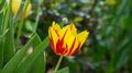 Flowers 16 - PhotoDune Item for Sale