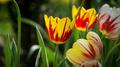 Flowers 19 - PhotoDune Item for Sale