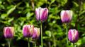 Flowers 41 - PhotoDune Item for Sale