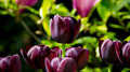 Flowers 46 - PhotoDune Item for Sale