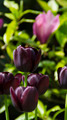 Flowers 47 - PhotoDune Item for Sale