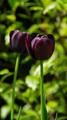 Flowers 50 - PhotoDune Item for Sale