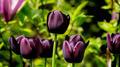 Flowers 43 - PhotoDune Item for Sale