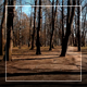 City Park - VideoHive Item for Sale