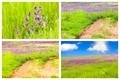 Meadow Backgrounds Collage - PhotoDune Item for Sale