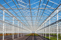Partly empty greenhouse against a blue sky - PhotoDune Item for Sale