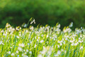 Large field with blossoming snowdrops - PhotoDune Item for Sale