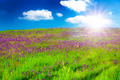 Field With Purple Flowers At Sunsrise - PhotoDune Item for Sale