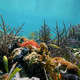 Coral garden in calm sea - PhotoDune Item for Sale