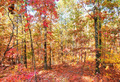 colors of autumn or fall in forest - PhotoDune Item for Sale