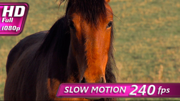 VideoHive Young Horse 4696762