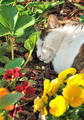 cat sleeping in flowers - PhotoDune Item for Sale