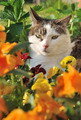 cat in flowers - PhotoDune Item for Sale