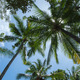 Coconut trees - PhotoDune Item for Sale
