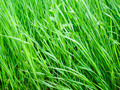 Green grass close-up 3 - PhotoDune Item for Sale