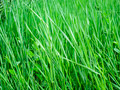 Green grass close-up 2 - PhotoDune Item for Sale