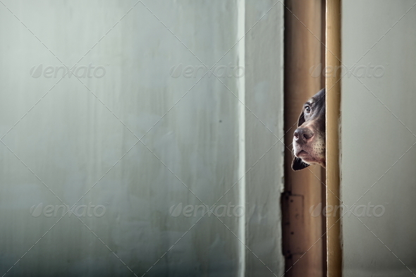 Hide and seek - Stock Photo - Images