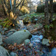 fresh flowing creek - PhotoDune Item for Sale
