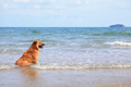 Dog on the beach - PhotoDune Item for Sale
