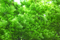 Tamarind leaves - PhotoDune Item for Sale