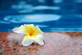 Frangipani Flower - PhotoDune Item for Sale