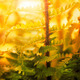 Fern forest - PhotoDune Item for Sale