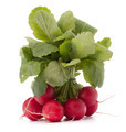 Small garden radish with leaves - PhotoDune Item for Sale