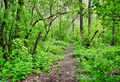 path in the spring deciduous forest