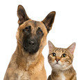 close-up of a cat and dog, isolated on white - PhotoDune Item for Sale