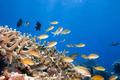Underwater landscape - PhotoDune Item for Sale