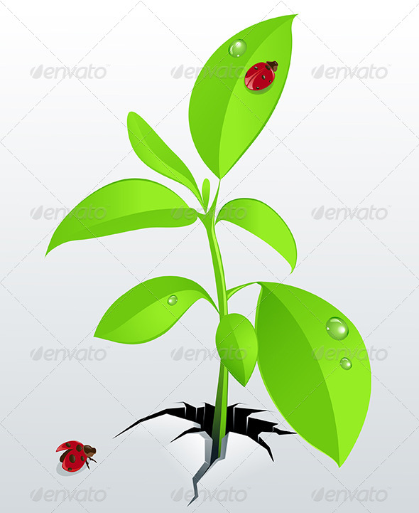 GraphicRiver Young Green Plant and Ladybird 4717741