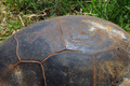 aldabra giant tortoise - PhotoDune Item for Sale