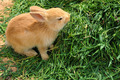 bunny rabbit feeding on grass - PhotoDune Item for Sale