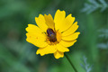 beetle on yellow flower - PhotoDune Item for Sale