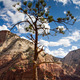 The Pine at the Rim - PhotoDune Item for Sale