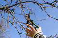 hand cut fruit tree twig clipper spring garden - PhotoDune Item for Sale