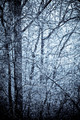 A frost covered decidious forest. - PhotoDune Item for Sale