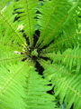 Fine pattern from leaves of fern - PhotoDune Item for Sale