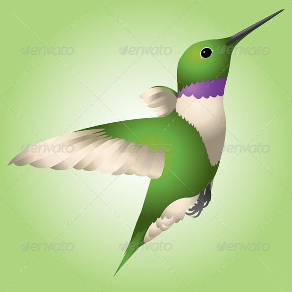 GraphicRiver Hummingbird 4728597