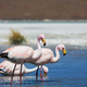 Flamingo - PhotoDune Item for Sale