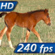 Foal - VideoHive Item for Sale