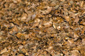 Background with dry beech leaves - PhotoDune Item for Sale
