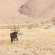 Oryx in Namibia - PhotoDune Item for Sale