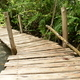 wooden pathway in spring forest - PhotoDune Item for Sale