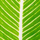 Texture of a green leaf as background - PhotoDune Item for Sale