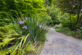 Slate Stone Garden Path with Oregon Irises - PhotoDune Item for Sale